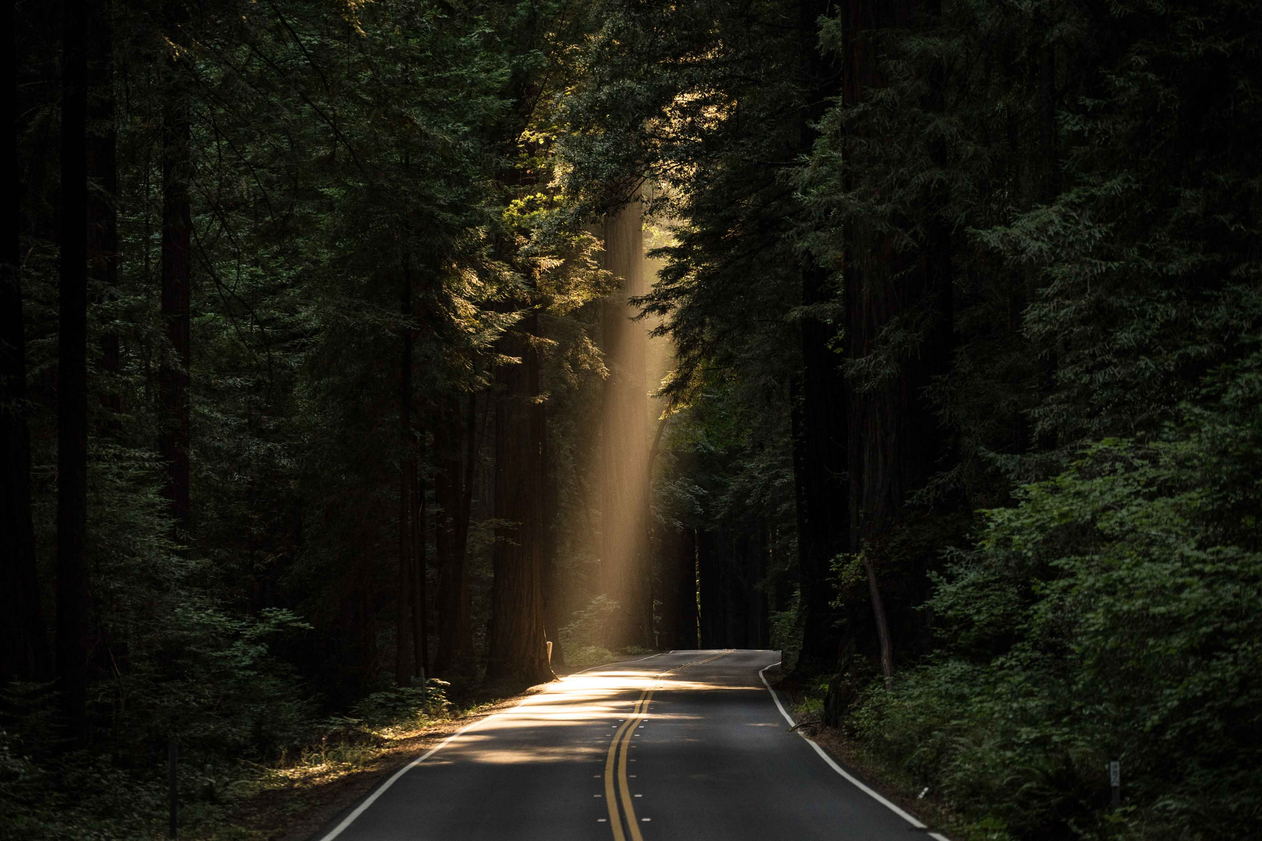 How I Doubled My Income After Divorce    a light shining on one stretch of road in the woods
